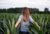 Young Girl Walking In Corn Field - free  images to use -