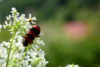 Random insects on the white flower - free  images to use -