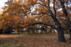 Autumn In Local Park - free  images to use -