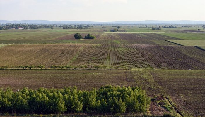 Picture of small agricultural fields