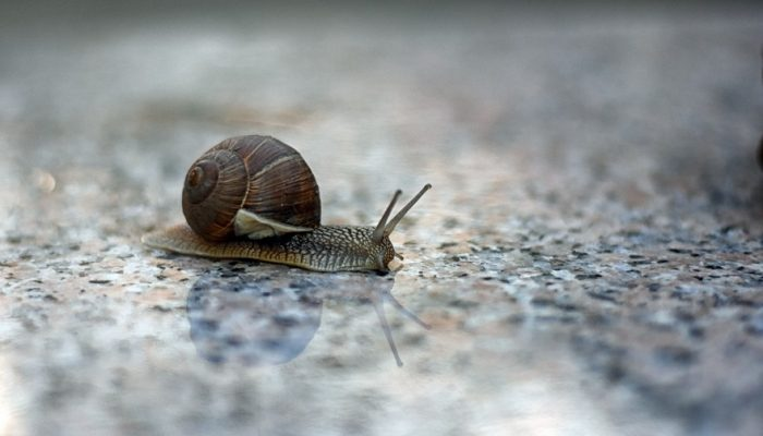 Picture of snail with a soft reflection on marble