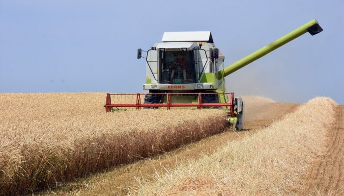 Picture of Claas combine harvesting wheat