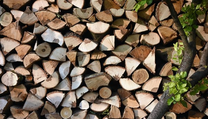 Just another picture of tree logs