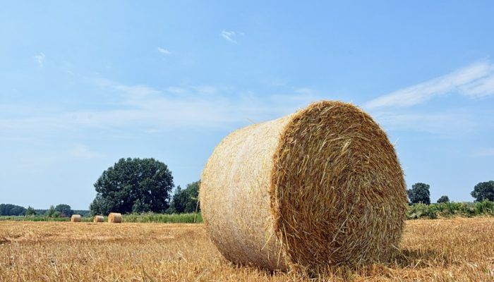 Picture of straw bale taken on nearby field