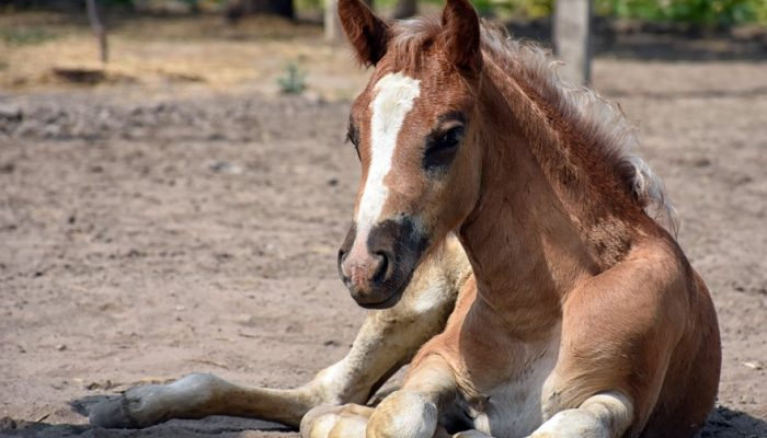 Photo of my neighbour foal