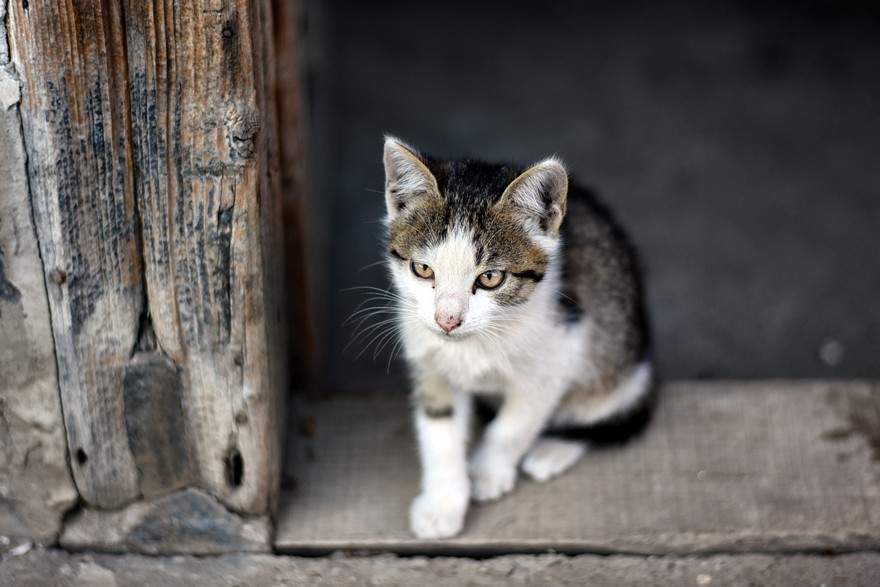 Kitten on doorstep - free animals images to use - kitten, cute, cat, animal