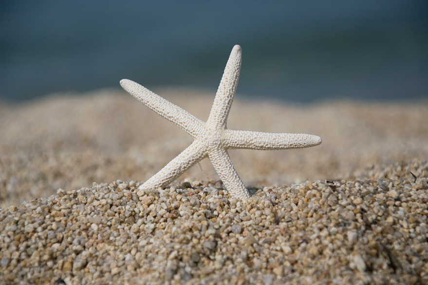 Sea star on the sand beach