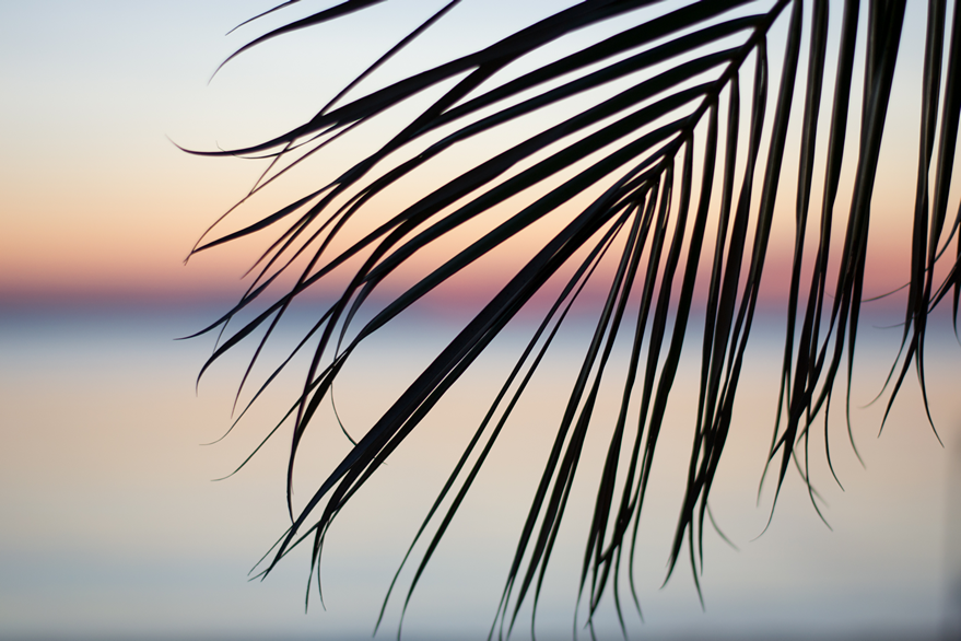 palm tree branch at sunset