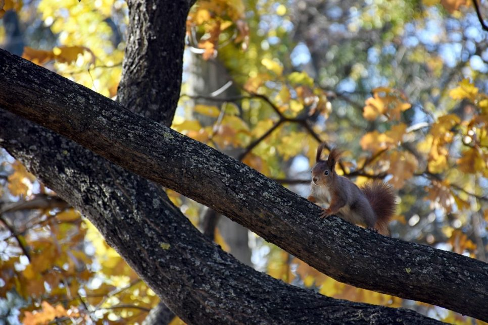 Picture of squirrel in local park