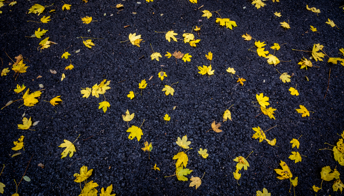 YYellow leaves on black asphalt photo