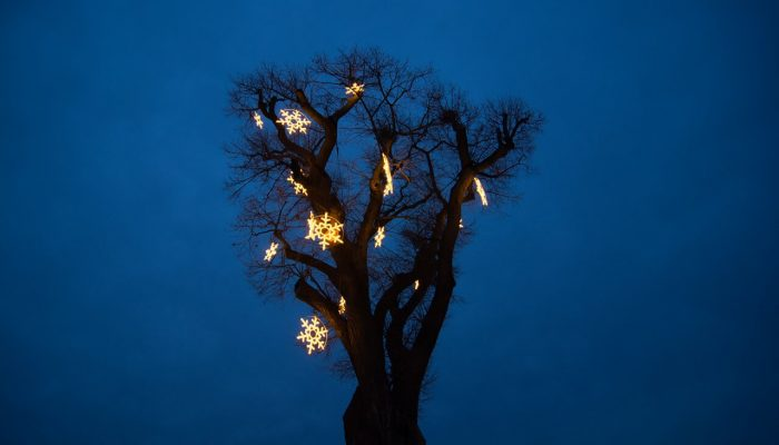 Christmas decorations on the old tree