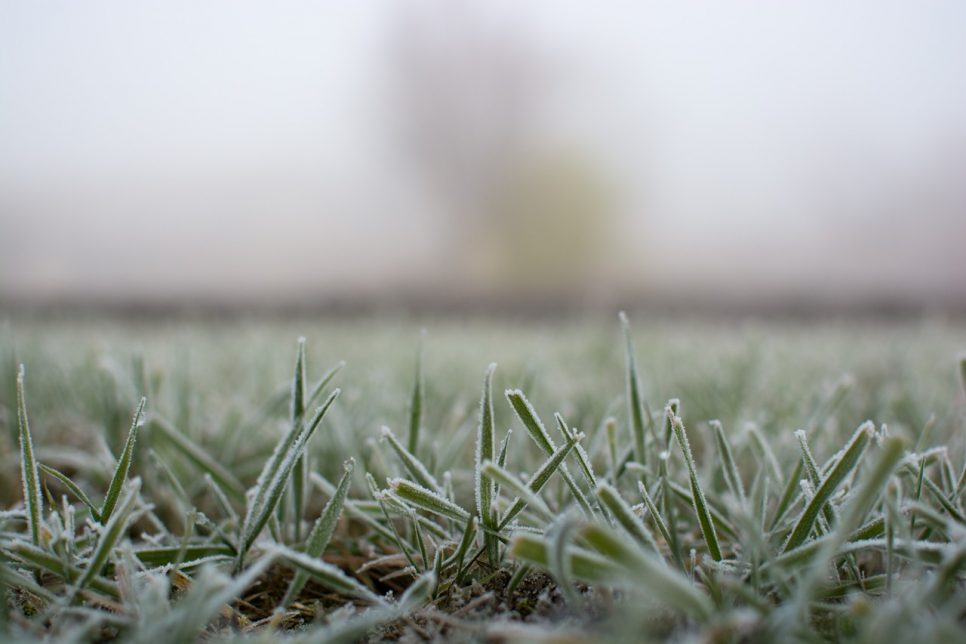 frosted grass on monday morning
