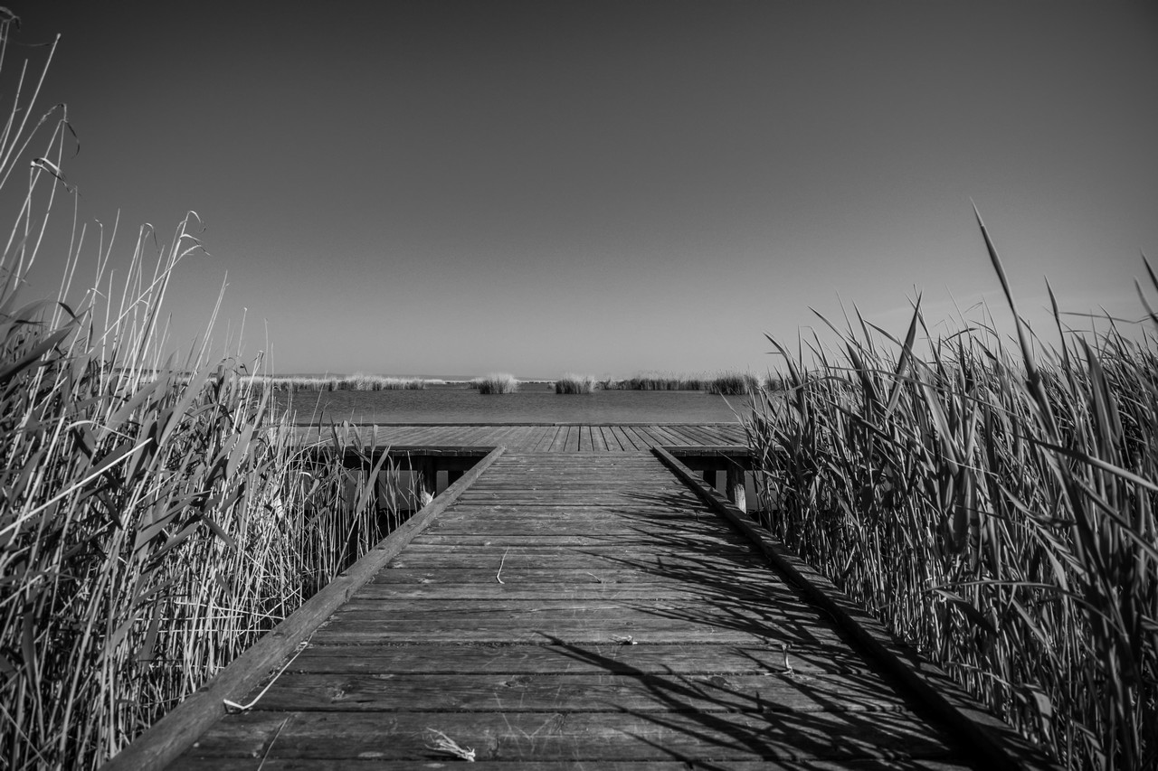 Lake Wooden Docks between the Cane B&W - free nature images to use - lake, cane, blackandwhite, b&w