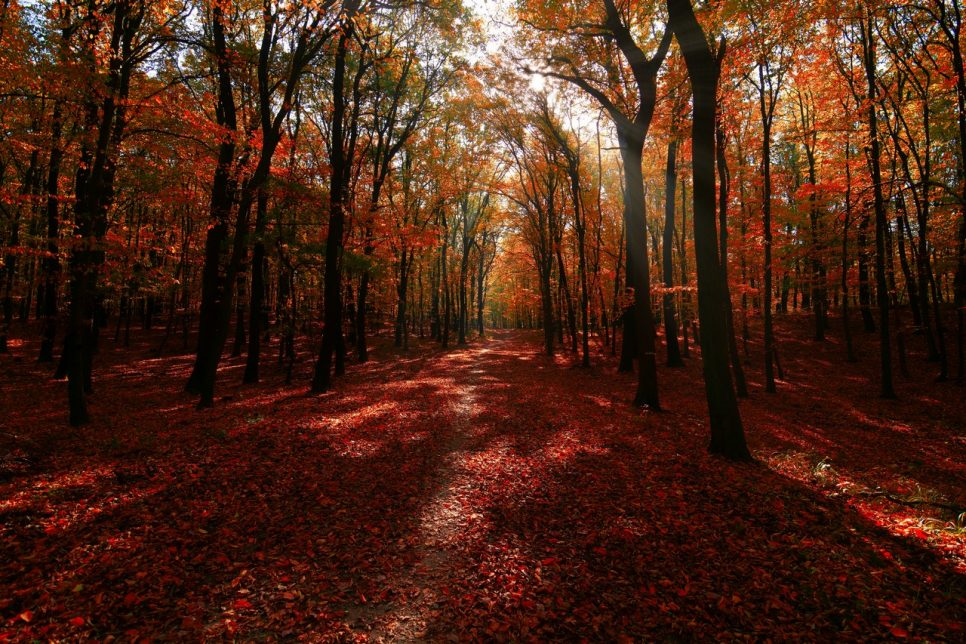 Autumn forest color burst with sunrays and orange leafs free photo