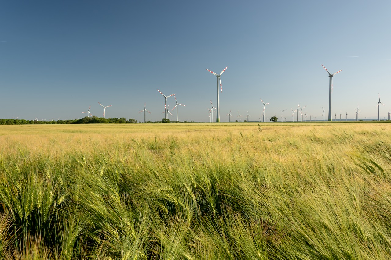 Wheat field & wind turbines - free nature images to use - wheat, summer, landscape, green